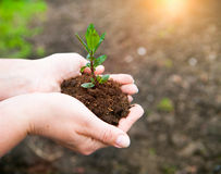 Female hands keeping young plant against the soil. Ecology conce Stock Photos
