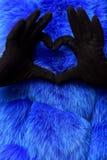 Female hands make heart. Female hands in black fashionable velvet gloves make heart from fingers on colorful blue fur background stock image