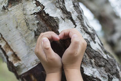 Female hands making an heart shape on a trunk of a tree. Royalty Free Stock Photo