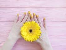 Female hands manicure gerbera stylish elegance flower on wooden background stock images