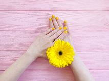 Female hands manicure gerbera flower on wooden background stock photo