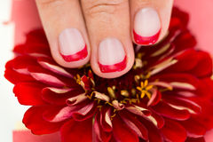 Female Hands With Manicure Nail Holding Gerbera Stock Photos