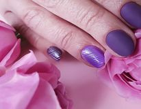 Female hands manicure purple delicate , passion fashion delight closeup decoration glamour background beauty elegance rose flower. Female hands manicure purple royalty free stock photos