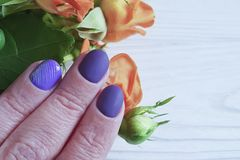Female hands manicure purple , fashion delight closeup decoration glamour beauty elegance rose flower. Female hands manicure purple, rose flower elegance beauty stock photos