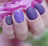 Female hands manicure purple, fashion delight closeup decoration glamour background beauty elegance rose flower. Female hands manicure purple, rose flower royalty free stock image