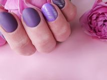 Female hands manicure purple , fashion delight closeup decoration glamour background beauty elegance rose flower. Female hands manicure purple, rose flower stock photo