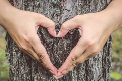 Female hands with manicure on the tree. Hands making an heart sh. Ape on a trunk of a tree. Special toning Stock Photography