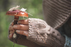 Female hands in mittens hold a forest mushroom Royalty Free Stock Images