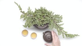 Tea ceremony. Female hands move chinese kettle near tea cups and plant in a pot on white background. Tea ceremony stock footage