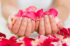 Female Hands With Nail Varnish Holding Rose Petals Stock Images
