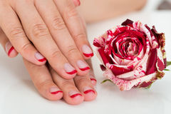 Female Hands With Nail Varnish Near The Rose Royalty Free Stock Images
