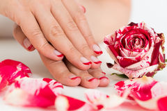 Female Hands With Nail Varnish Near The Rose Royalty Free Stock Photos