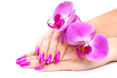 Female hands with orchid flower. isolated Royalty Free Stock Photos