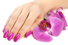 Female hand with orchid flower.  Royalty Free Stock Image