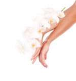 Female hands with orchid flowers Stock Photo