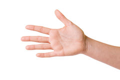 Female hands over white background Royalty Free Stock Image