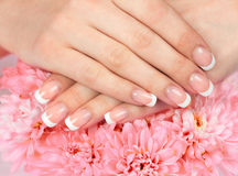 Female hands with perfect french manicure Stock Photography