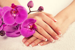 Female hands with perfect french manicure Stock Photo