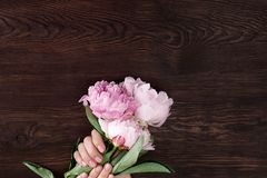 Female hands with pink manicure hold peonies royalty free stock photography