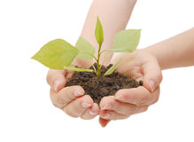 Female hands with a plant Stock Images