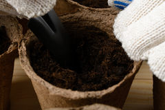 Female hands planting seeds in a peat pot Royalty Free Stock Image