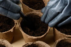 Female hands planting seeds in a peat pot Royalty Free Stock Photo