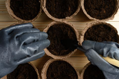 Female hands planting seeds in a peat pot Royalty Free Stock Photos