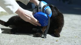 Female hands put a respirator on a cat outdoors. pandemic