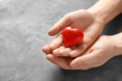 Female hands with red heart. On grey textured background royalty free stock photography