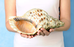 Female hands with shell Stock Photo