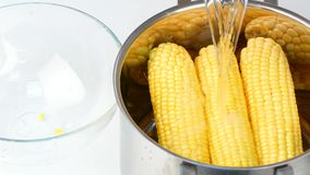 Put corn in a saucepan. Female hands shift the heads of fresh corn from the muck to the pan stock footage
