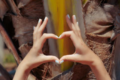 Female hands showing heart symbol. On palm tree background stock images