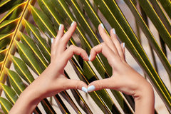Female hands showing heart symbol. On palm tree background royalty free stock photo