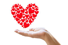 Female hands taking care of red hearts symbol isolated on white Royalty Free Stock Image