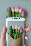 Female hands taking a picture of beautiful fresh tulips with smartphone Stock Photos