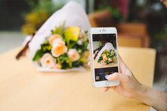 Female hands taking a picture of beautiful fresh tulips with sma Stock Photography