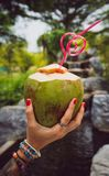 Female hands in tattoos hold a coconut with a tubule in Thailand`s tropical garden. modern style of rest. Thai style royalty free stock photography