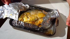 Female hands unfolding of baked fish in foil.  stock video