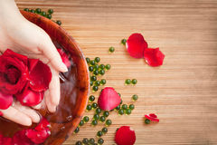 Female Hands in Water with Red Rose and Petals. Spa Salon: Beautiful Female Hands with French Manicure in the Bamboo Bowl of Water with Red Roses and Rose Petals Stock Images