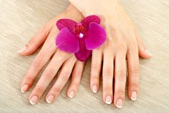 Female hands with wild purple orchid. Royalty Free Stock Photo