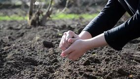 Female hands working in the land stock video