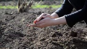 Female hands working in the land stock footage