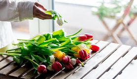 Female hands wrapping beautiful tulips on wooden table royalty free stock photography