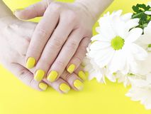 Female hands yellow manicure, bright fashion design chrysanthemum flower on a colored background, summer. Female hands manicure, chrysanthemum flower on a stock photos