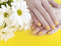 Female hands yellow manicure, fashion design chrysanthemum flower on a colored background, summer. Female hands manicure, chrysanthemum flower on a colored royalty free stock photography