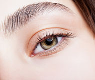 Female hazel eye makeup Royalty Free Stock Photos