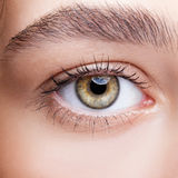 Female hazel eye makeup Stock Image