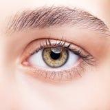 Female hazel eye makeup Royalty Free Stock Image