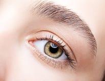 Female hazel eye makeup Royalty Free Stock Images