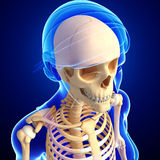 Female head skeleton artwork Stock Photo